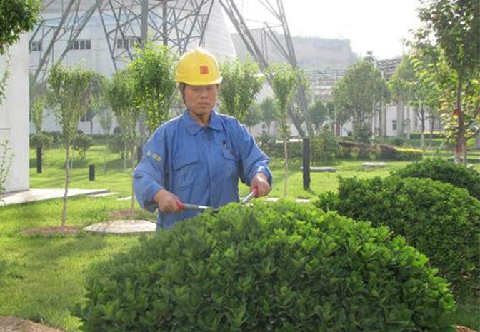 绿化养护价格